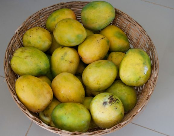 Parkland Homeowners Benefit from the African Mango