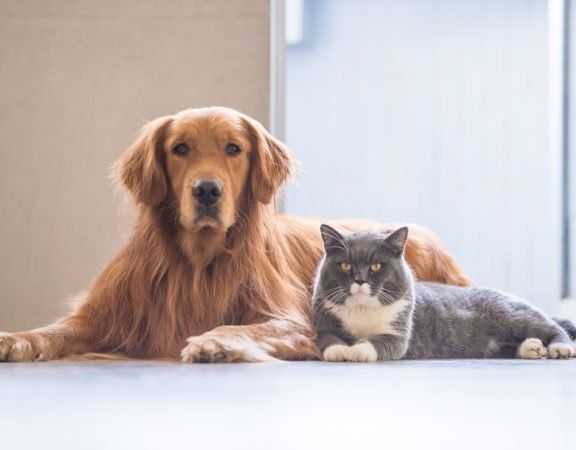 Lively Pets in Palm Beach Gardens Homes