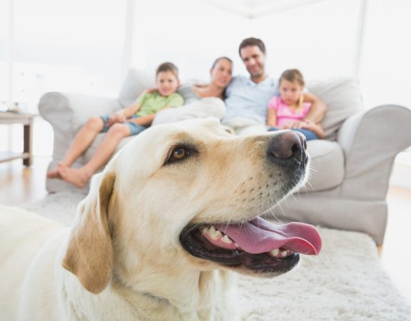 Weston Homeowners' Silly Dog Tricks