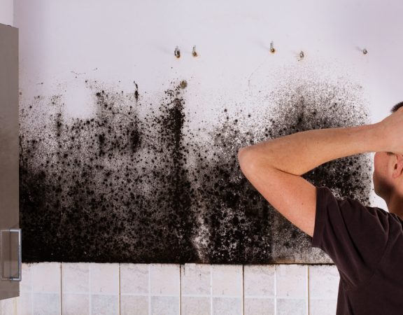 Discover How to Keep Mold Out of Your Home